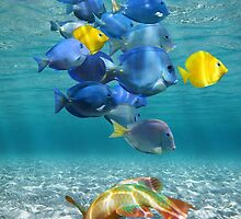 Colorful underwater marine life by Dam - www.seaphotoart.com