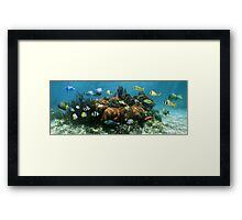 Underwater panorama in a coral reef Framed Print