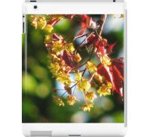 Acer platanoides 'Crimson King' iPad Case/Skin