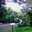 Lushness Of El Valle, Panama III by Al Bourassa