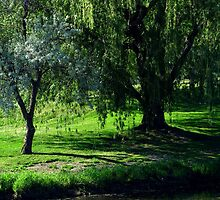 Weeping Willow by Starsania