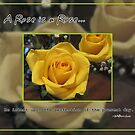 A rose is a rose... by Greeting Cards by Tracy DeVore