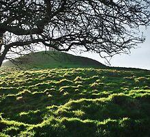The Glastonbury Tor Hillside by Laura Sanders