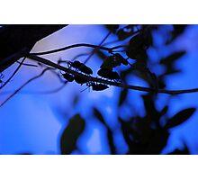 Everglades Bugs Photographic Print