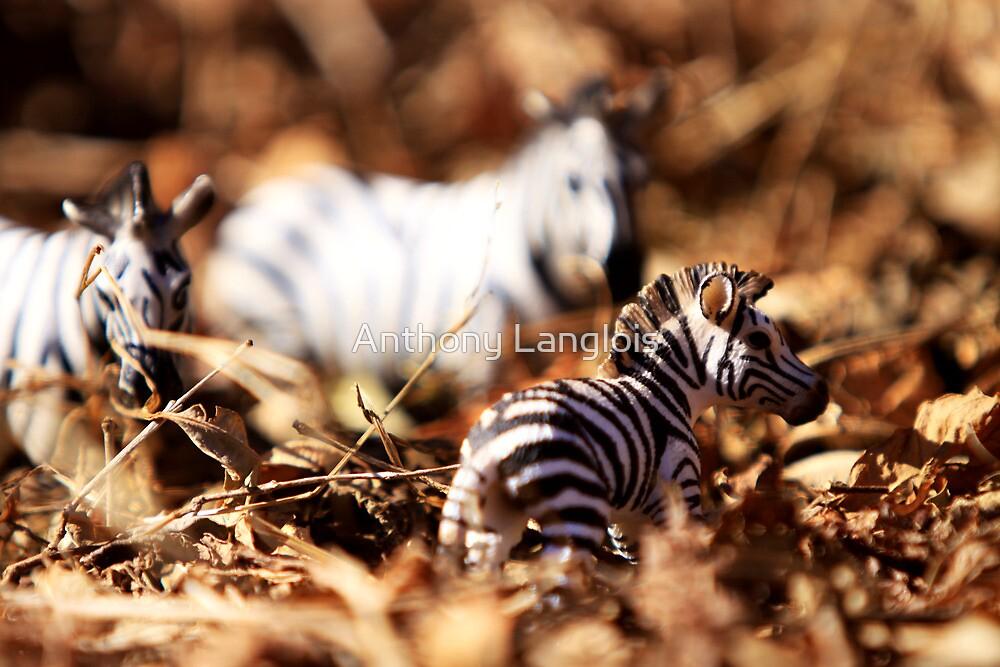 stripes like mine... by Anthony Langlois