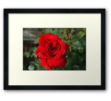 Perfect in Red Framed Print