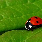 Ladybird Beetle by Nancy Barrett