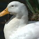 Close To a Duck... by Larry Llewellyn
