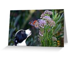 Dog and Butterfly Greeting Card