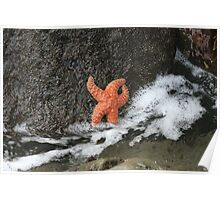 Sea Star in a Tidal Pool Poster