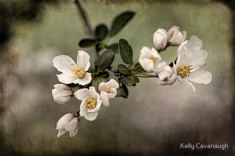 spring has sprung by Kelly Cavanaugh