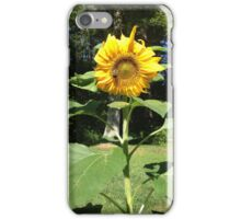Bumble bee on a sunflower iPhone Case/Skin