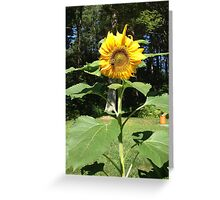 Bumble bee on a sunflower Greeting Card