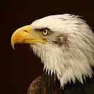 Portrait of an eagle by Hugster62