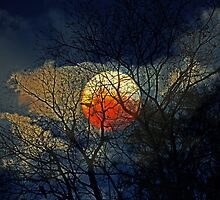 Bad Moon Rising by Evita