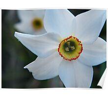 Floral ? Poster