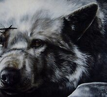 The Wolf by Anne Zoutsos
