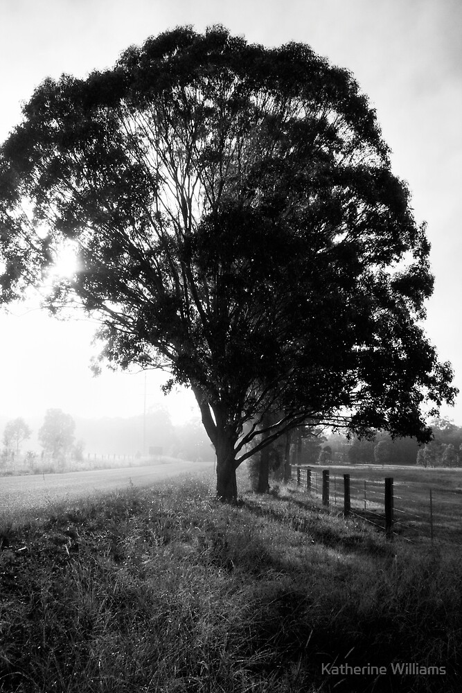 morning fog by Katherine Williams