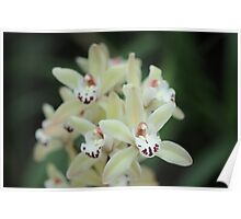 Orchid Depth Poster