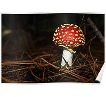 Wee little toadstool,*Amanita, fly agaric* Poster