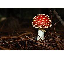 Wee little toadstool,*Amanita, fly agaric* Photographic Print
