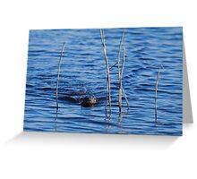 Otter Swimming through Reeds Greeting Card