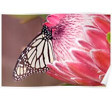 Butterfly Beauty. Poster