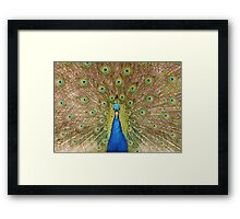 Peacock Displaying Feathers (head on) Framed Print