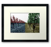 Row 61 Framed Print
