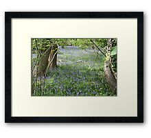 Bluebells in Priors Wood Framed Print