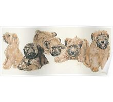 Soft-coated Wheaten Terrier Puppies Poster