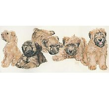 Soft-coated Wheaten Terrier Puppies Photographic Print
