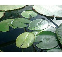 Simply Lotus 7 Photographic Print
