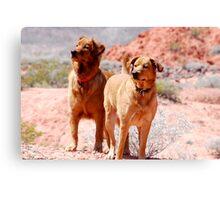 Desert Dogs Canvas Print