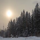 Snowy Finland, pine trees with misty sun by Katariina Jarvinen