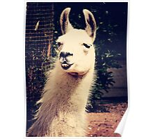 What The Llama Poster