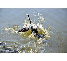 Water bird on landing. Photographic Print