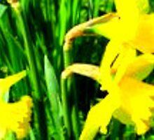 Daffodils. by fairytrooper