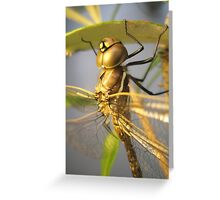 Dragon-fly Macro. Greeting Card