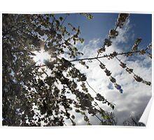 Spring Sunburst Poster