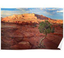 Desert Juniper Poster