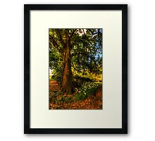 Strength - Mount Wilson , Blue Mountains, Sydney - The HDR Experience Framed Print