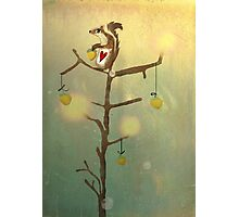 Gold squirrel glide tree alone sunset Photographic Print