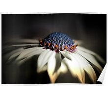 Lighted Daisy Poster