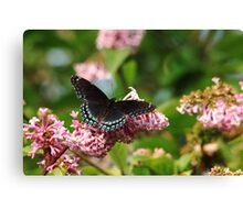 Red Spotted Purple Canvas Print
