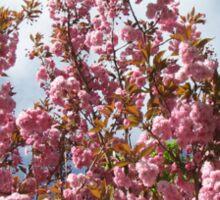 Pink Tree Blossoms Sticker