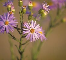Wild Flowers by Gail Falcon