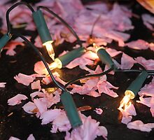 Fairy lights and blossom by Nejlah Shaddouh