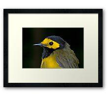 Male Hooded Warbler Framed Print