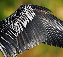 Anhinga Wing by Gail Falcon